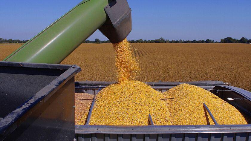 In this photo taken Sept. 2008, central Illinois farmer Gary Niemeyer, not pictured, unloads harvest