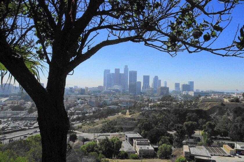 Downtown L.A. from Elysian Park