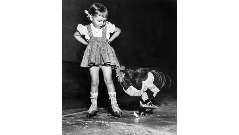 Oct. 12, 1952: Buster, a rooster, ice skates as Cathy Henderson of San Marino watches at the Pasaden