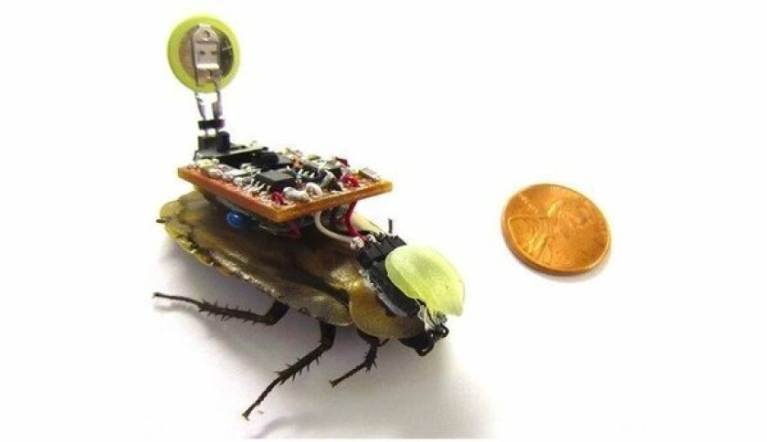Researchers have created an apparatus that will let users control a cockroach's movements with their smartphone.