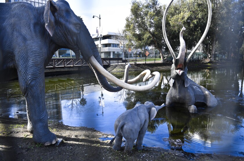 Statues of mammoths at the La Brea Tar Pits in 2017.