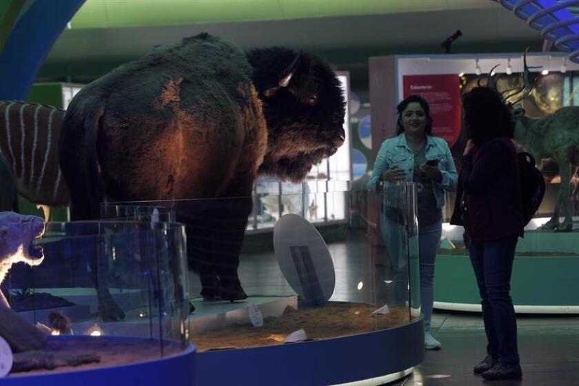 Fotografía del 11 de abril de 2018 de visitantes en el Museo Natural de Historia en Ciudad de México (México). EFE