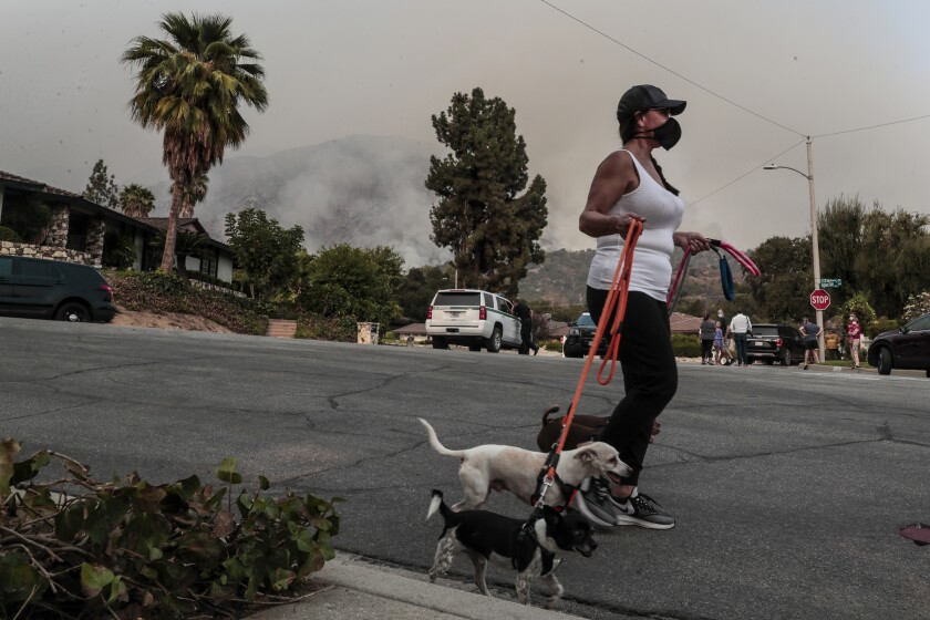 Claudia Alcaino walks her dogs in Arcadia on Sunday as crews battle the Bobcat fire in Angeles National Forest.