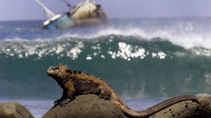Plight of the Iguana
