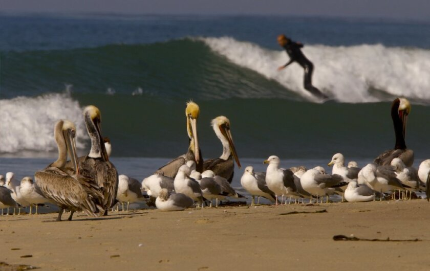 The Trestles surf break would have been affected by a proposed toll road through parts of San Onofre State Beach.