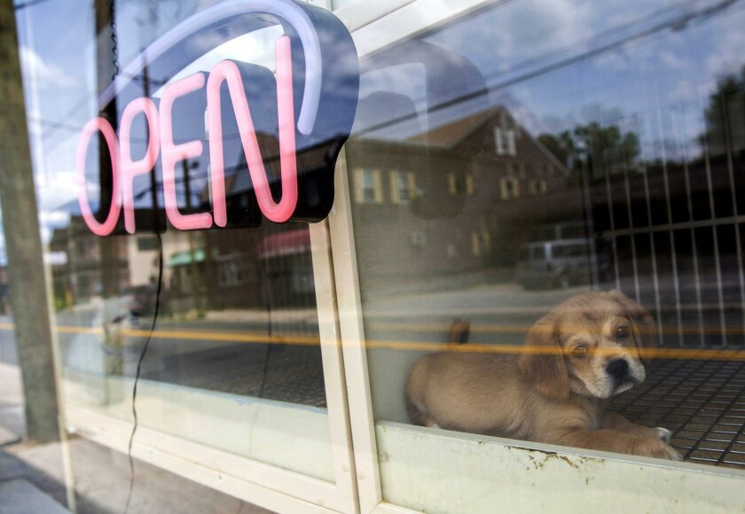 "Pet stores across the nation are coming under fire for selling puppies raised in so-called ""mills."""