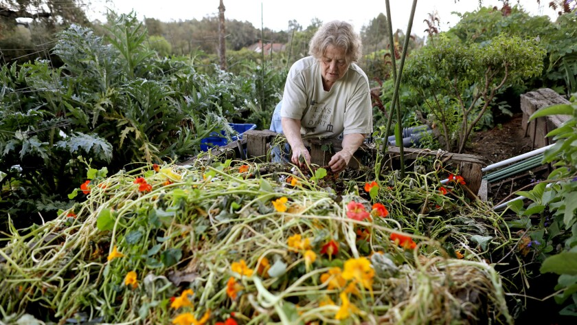 PASADENA, CALIF. -- THURSDAY, MARCH 21, 2019: Yvonne Savio, 71, a master gardener, compost bin at he