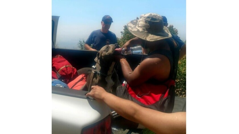A dog suffering from heat exhaustion was also rescued from Brand Park on July 15, 2017.