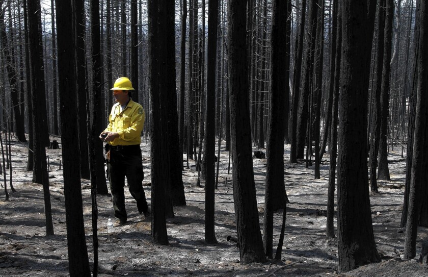 A U.S. Forest Service soil scientist surveys the burned area of the Stanislaus National Forest. Some environmentalists oppose the plan for a massive salvage logging operation in the Rim fire burn area.