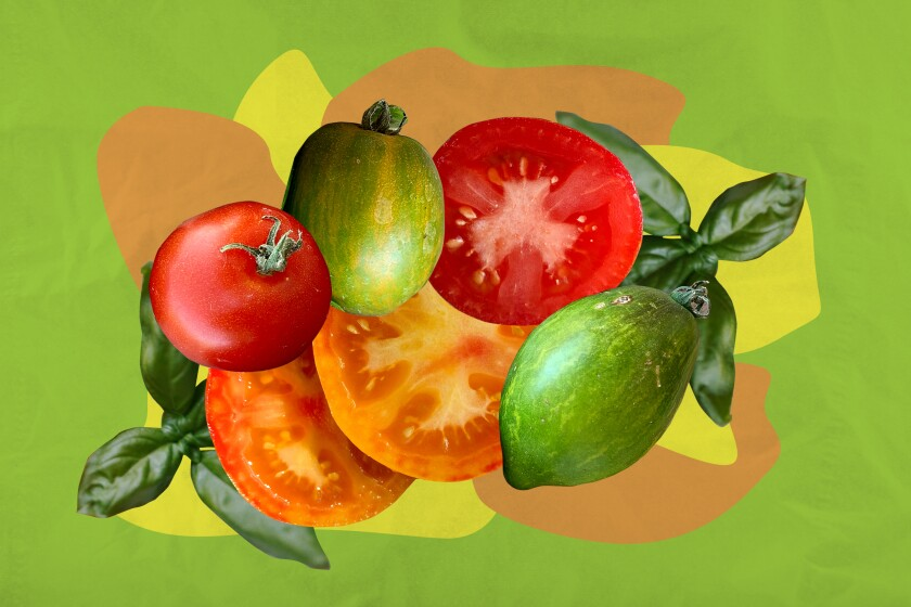 An illustration featuring some of the most popular tomato varieties of the year.
