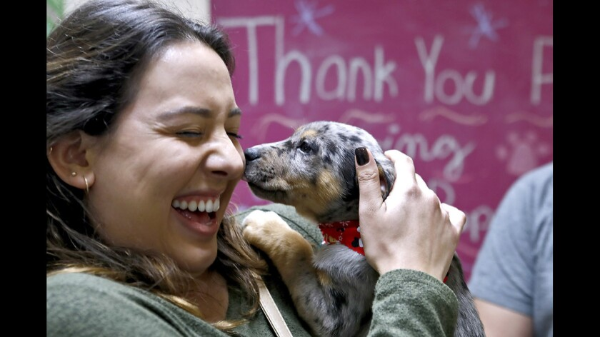 Yvette Castanada, 22 of Valencia, reacts as the puppy she picked out nuzzles up to her during the annual Muttshack Animal Rescue and Petco Burbank, at the Victory Blvd. store in Burbank on Saturday, Dec. 23, 2017. The Muttshack Animal Rescue Foundation brought about 20 puppies ready for adoption and more than 40 people waited in line a long as a couple of hours to get a chance to take one home.