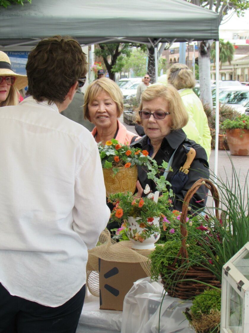 A shopper selects a pot full of spring blooms and ivy at La Jolla Garden Club's 38th annual Flower Market, May 7, 2016, on the Chase Bank patio, corner of Girard Avenue and Silverado Street. The club sold member-designed plant arrangements in a variety of fanciful containers to raise funds for hort