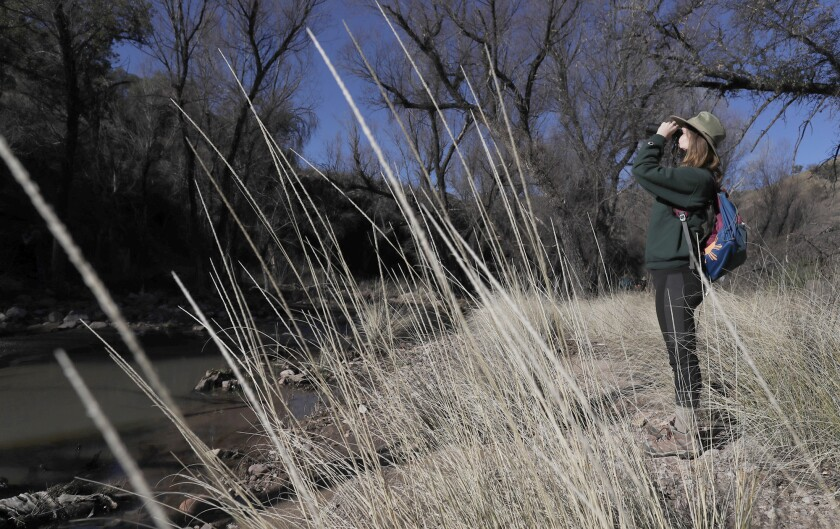 CORONADO NATIONAL FOREST, ARIZ. -- SUNDAY, MARCH 3, 2019: Danielle Hargett, of Tucson, looks for bir