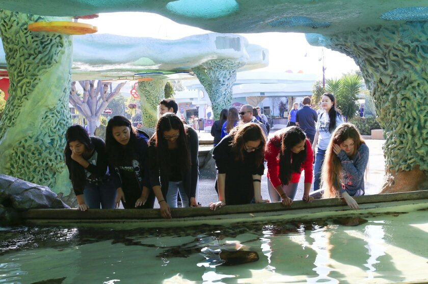 Students from Wilson Middle School look over bamboo sharks at SeaWorld before deciding whether to pet them. They're participating in a pilot program that's a collaboration of SeaWorld and San Diego Unified Schools.