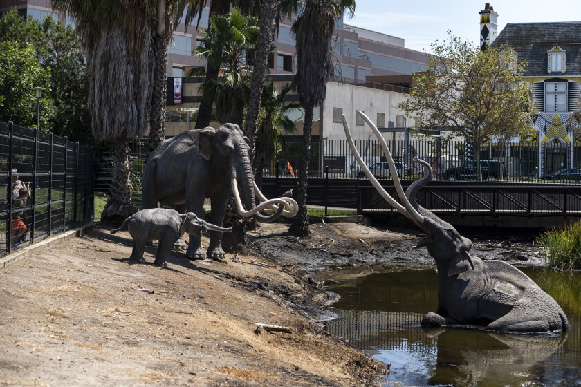 Mammoth news! La Brea Tar Pits chooses its design team