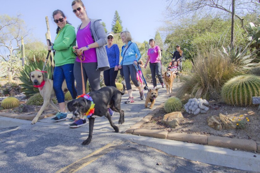 Seventh annual 5K Paw Walk in the Garden