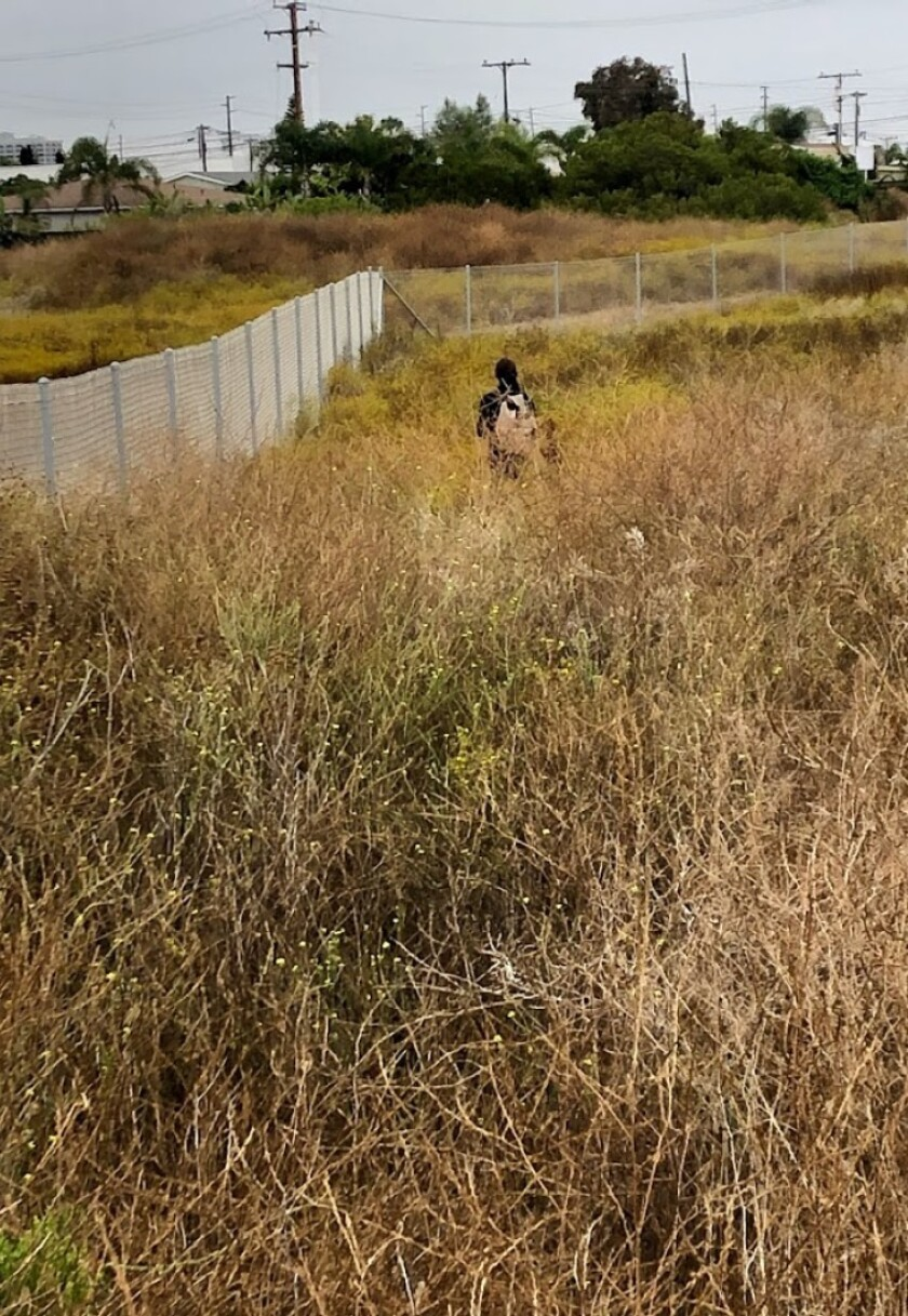 Newport-Mesa school district will remove unauthorized fence bordering Banning Ranch