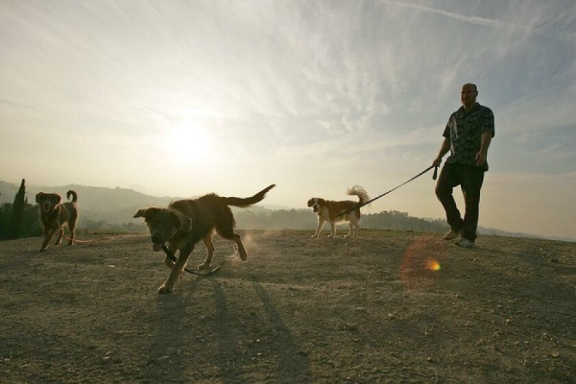 """Chris Hogenesch walks with his dogs on the hill. """"There aren't many places like this left in Los Angeles,"""" he says. """"I like to hang out up there and watch the sunset."""""""