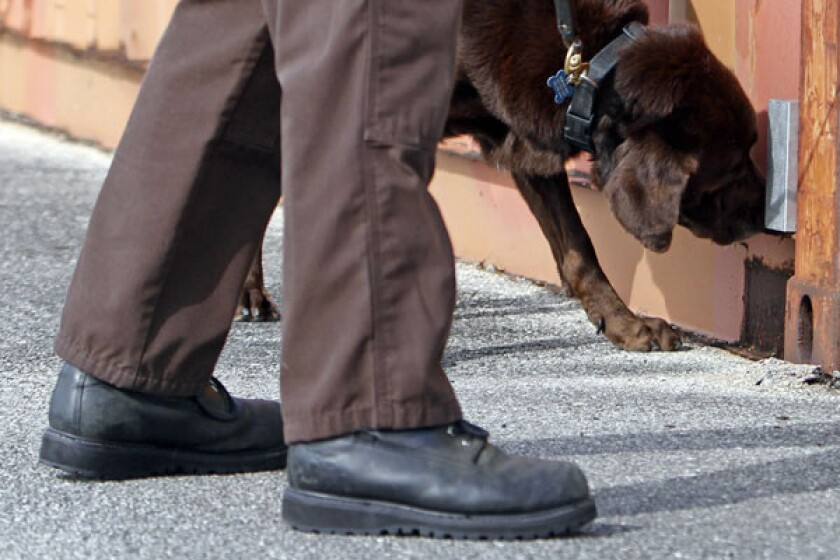 High court debates use of sniffer dogs: same as trick-or-treaters?