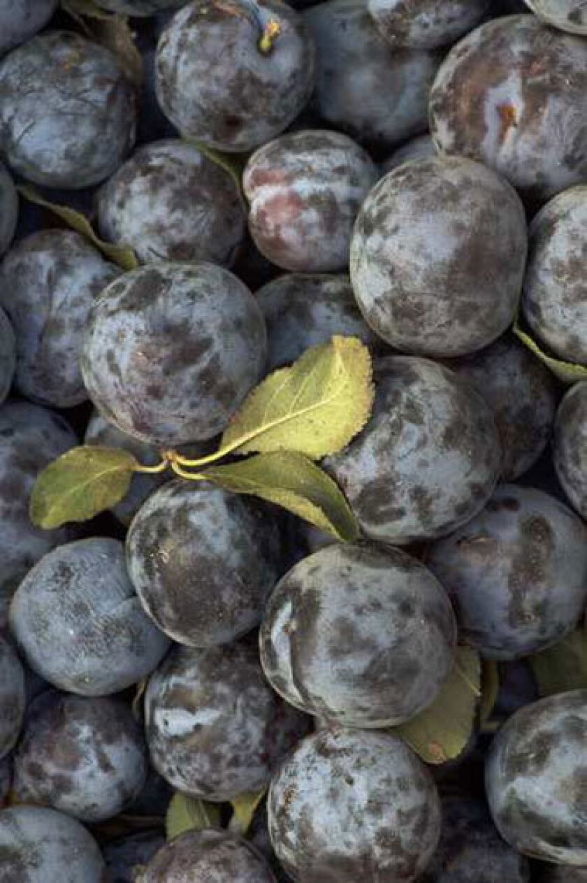 Damson plums grown by Burkart Farms in Dinuba.