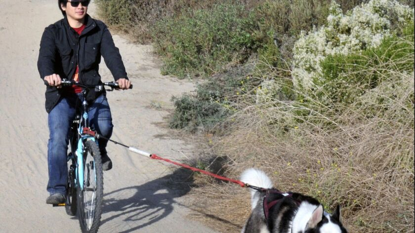A Siberian husky pulls Viet Tran of Van Nuys on his bicycle at Fairview Park in Costa Mesa in December 2017.