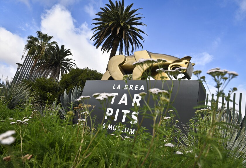 The pedestrian entrance to the La Brea Tar Pits & Museum.