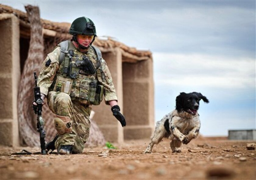 This is a undated Ministry of Defence handout photo made available on Thursday Oct. 25, 2012  of Lance Corporal Liam Tasker and his Springer spaniel mix Theo.   Theo the bomb-sniffing army dog who died in Afghanistan on the day his handler was killed has been honored with Britain's highest award fo
