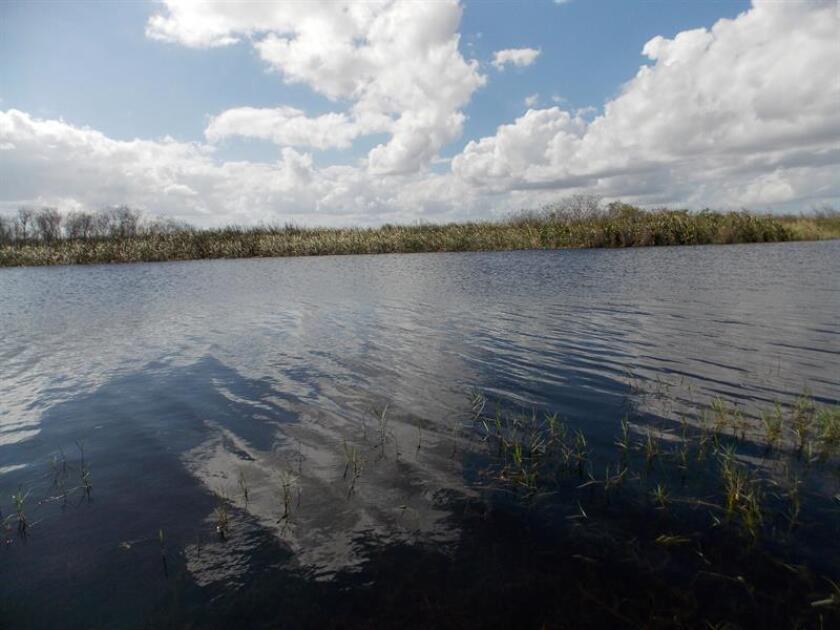 El aumento del nivel del mar constituye una seria amenaza para las zonas costeras de los Everglades, el enorme humedal localizado en el sur de Florida, por la alarmante salinización de los acuíferos, señala un estudio divulgado hoy por la Universidad Internacional de Florida (FIU). EFE/Archivo