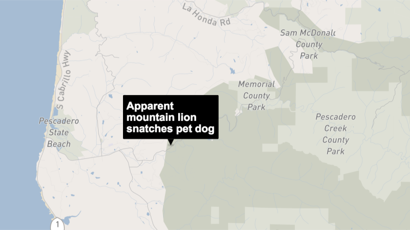 Apparent Mountain Lion Enters Bedroom And Snatches Barking Dog Los Angeles Times