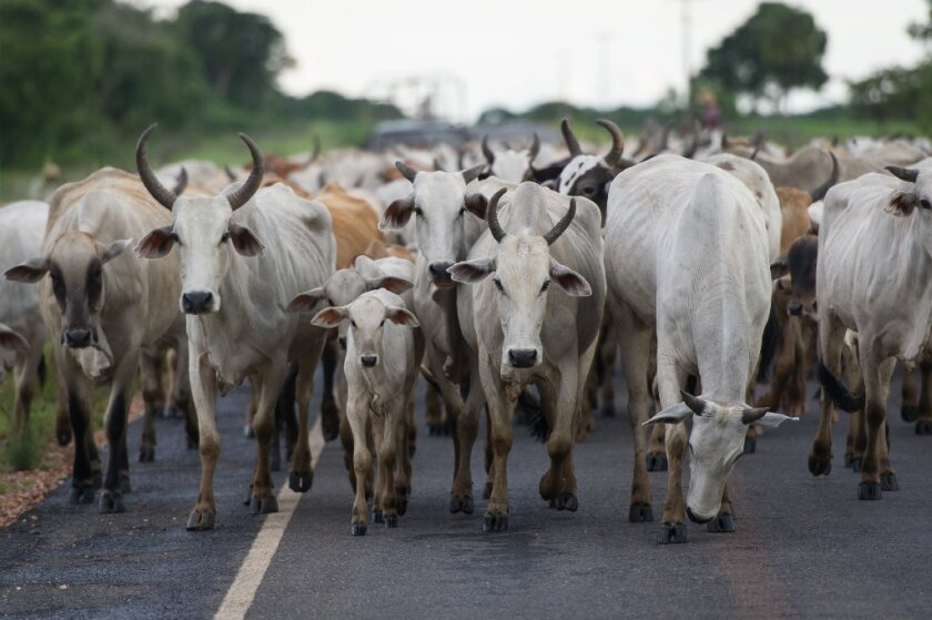 Food FYI: Brazil beef ban expands amid mad cow fears