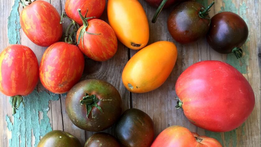 Tomatoes that are in bloom right now – about three weeks earlier than normal.