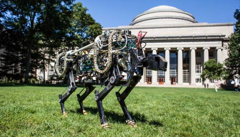 This robotic running cheetah sports some fashionable cheetah-print accessories on its black body.