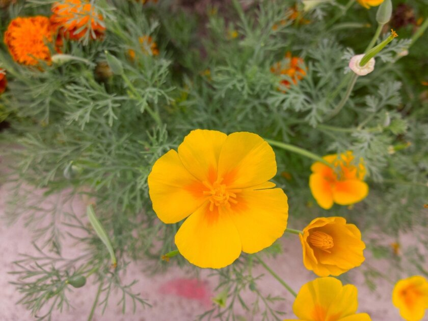Plant wildflowers now.