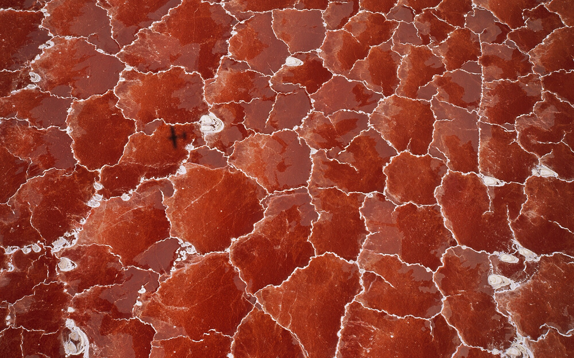 Salt-loving algae gives a red color to the hyper-saline waters of Lake Natron in the Great Rift Valley on the border between Tanzania and Kenya.  The lake has an unusual mineral content that is leached from the surrounding volcanoes.  The temperatures in the salty mud can reach 50 degrees Celsius (120 degrees Fahrenheit), and depending on rainfall, the alkalinity can reach a pH of 9 to 10.5 (almost as alkaline as straight ammonia).