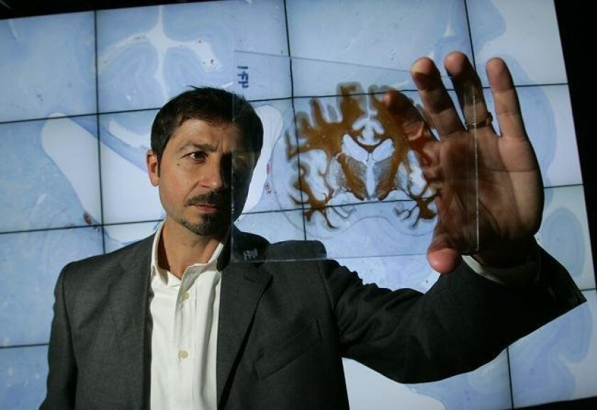Jacopo Annese, director of the UCSD Brain Observatory, holds a mounted slide of a human brain in front of a multiscreen display at the California Institute of Telecommunications and Information Technology.  (John Gibbins/Union-Tribune)