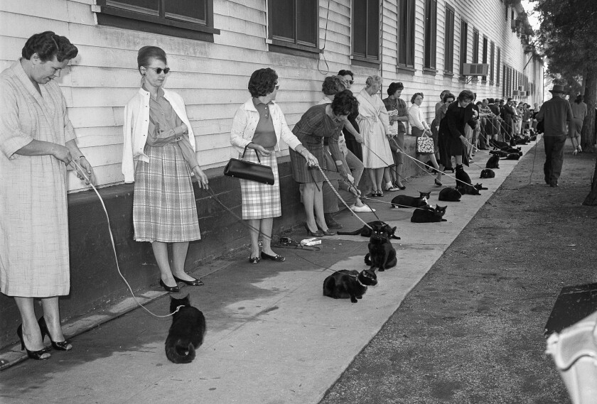 "Nov. 27, 1961: Black cats and their human companions wait during a casting call for the upcoming movie ""Tales of Terror."""