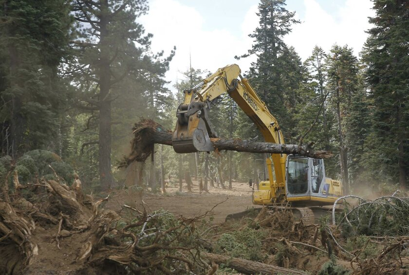 FILE - In this Sept. 25, 2013, file photo an excavator removes trees that were bulldozed for a firebreak in the battle against Rim Fire along Dodge Ridge in the Stanislaus National Forest, near Tuolumne City, Calif. Wildlife advocates on Wednesday, Sept. 3, 2014, plan to sue the U.S. Forest Service