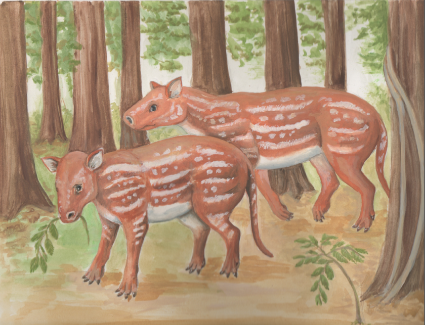 An artist's rendition shows Cambaytherium thewissi, which lived in India alongside ancestors to the modern rhinoceros, tapir, hippo and horse.