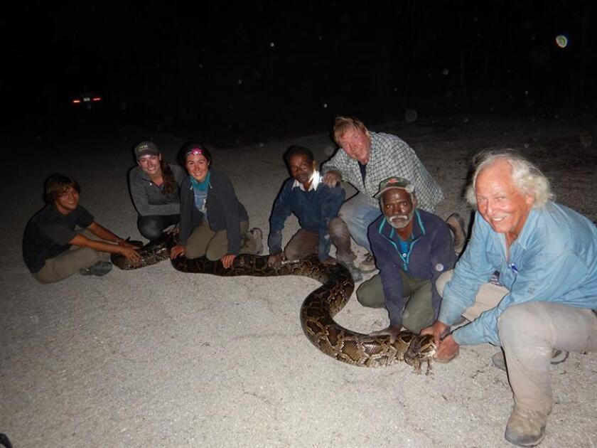 """Fotografía cedida en donde aparecen los dos cazadores de serpientes de la India Vadivel Gopal y Masi Sadaiyan posando con una serpiente junto a otras personas. En sus ocho primeros días de trabajo en los Everglades, en Florida, dos cazadores de serpientes de la India capturaron 13 pitones birmanas, y no a base de encantamientos con flauta sino gracias a su conocimiento para """"leer señales"""" en la selva que nadie más advierte. Vadivel Gopal y Masi Sadaiyan pertenecen a la tribu de los Irula, famosa desde tiempos inmemoriales por su habilidad para cazar serpientes y ratas en la selvática y montañosa provincia de Tamil Nadu, en el sur de la India. EFE/Ed Metzger/University of Florida/SÓLO USO EDITORIAL/NO VENTAS/CRÉDITO OBLIGATORIO"""