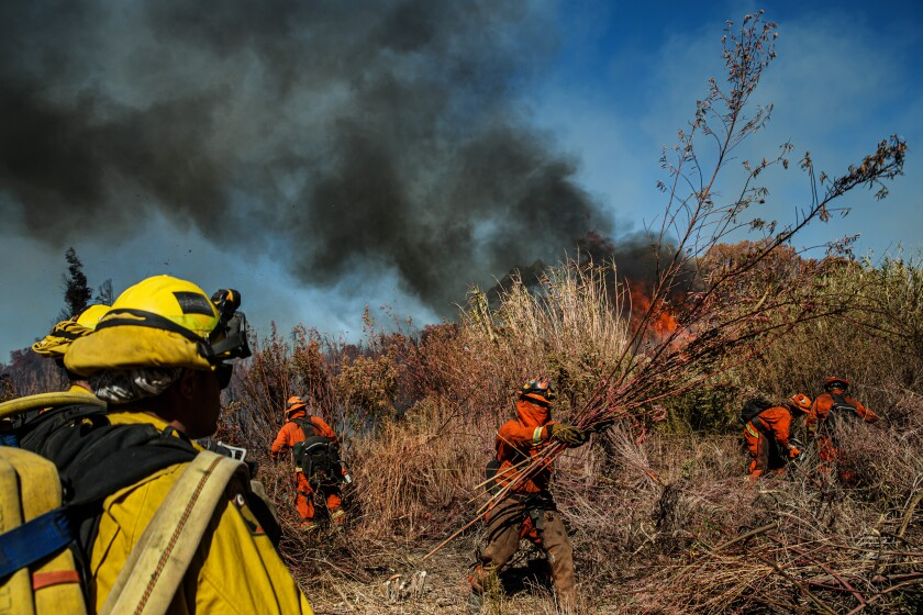 Inmate firefighters clear brush ahead of the Maria fire near Santa Paula