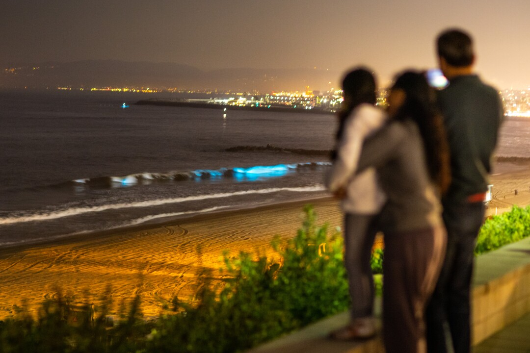 People lined up along the Esplanade with hopes of witnessing the blue bioluminescent waves glowing off the coast of Redondo Beach