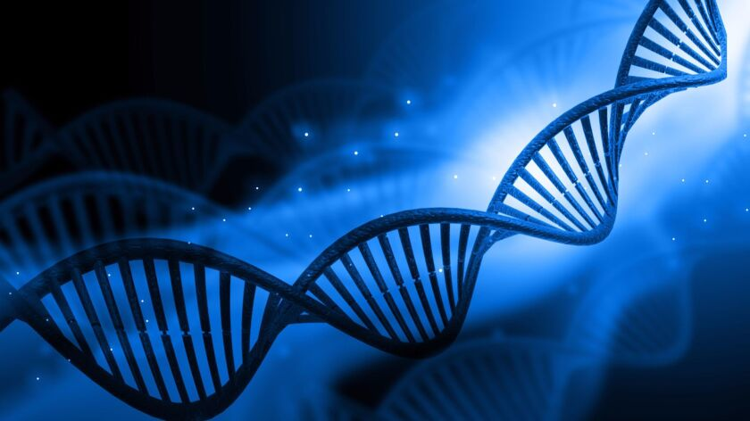 A recently developed genome editing technique called base editing allows researchers to find and rep