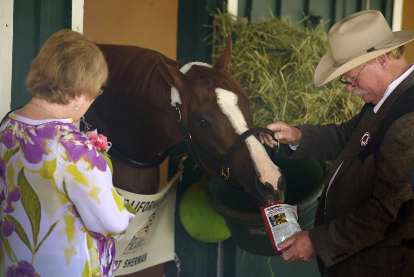"Steve Coburn, with wife, Carolyn, feeds California Chrome his favorite treat, Mrs. Pastures Cookies for Horses, at Pimlico Racetrack during  the 2014 Preakness. ""He runs for those cookies,"" said Steve."