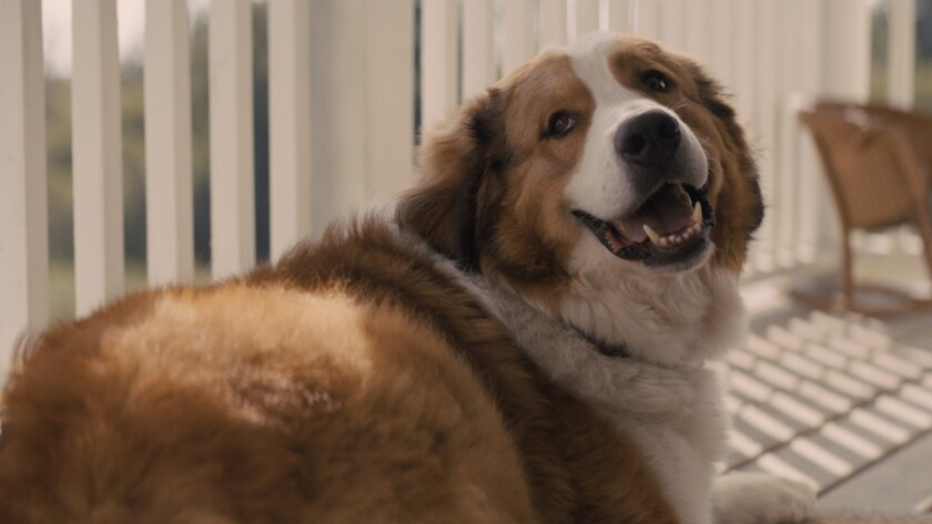 "Bailey (voiced by Josh Gad) in a scene from ""A Dog's Journey."" Credit: Universal Pictures/Amblin Ent"