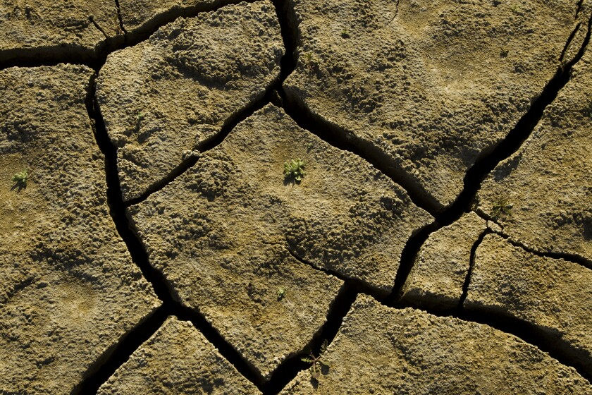 A tiny plant struggles to emerge from a cracked, dry lake bed