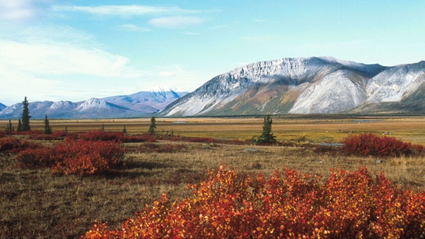 The Arctic National Wildlife Refuge in Alaska will soon be open to oil drilling.