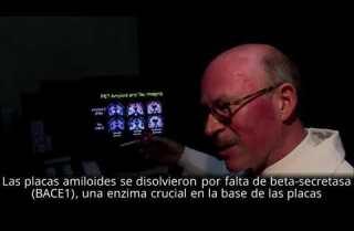 Terapia revierte con éxito el Alzheimer en ratones