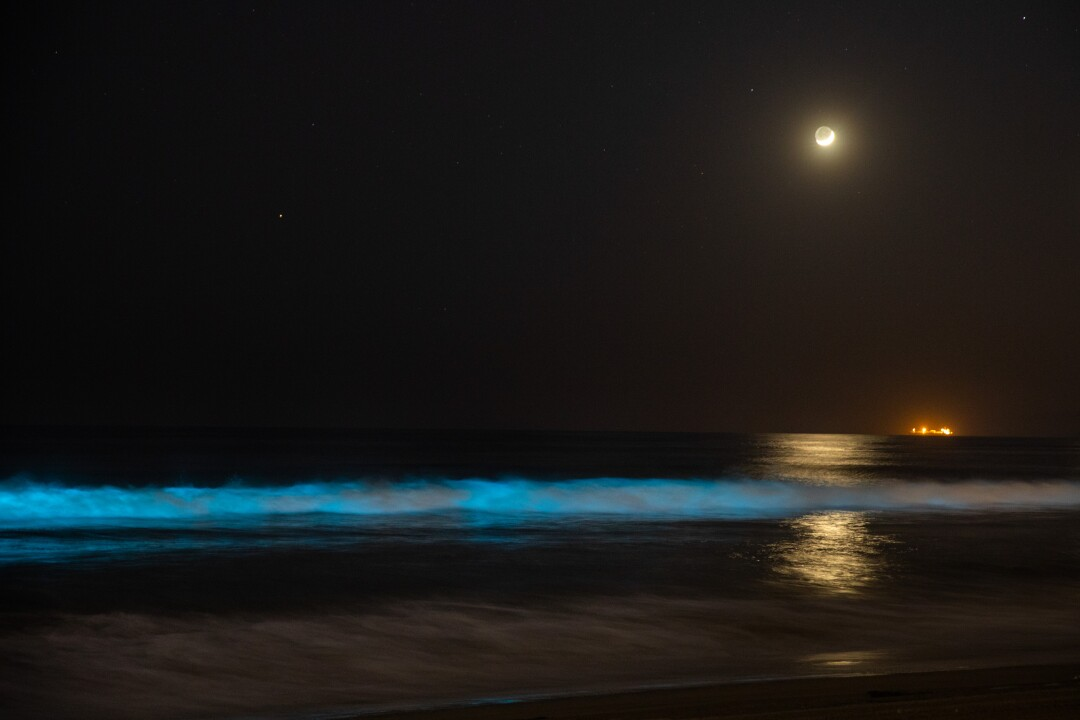 Bioluminescent waves glow off the coast of Hermosa Beach.