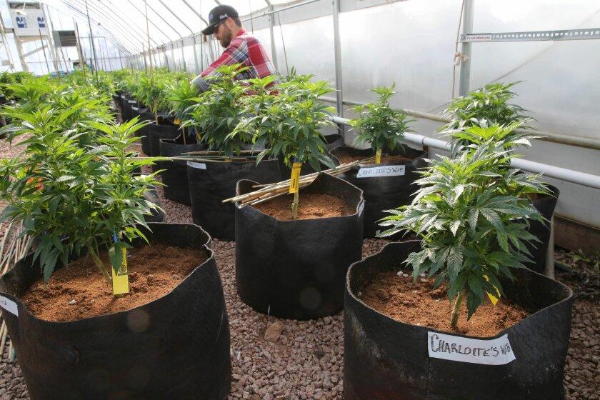 Where else is recreational marijuana legal?