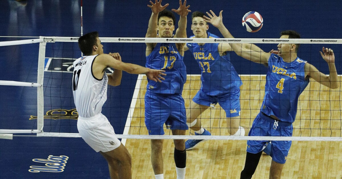 Long Beach State tops UCLA for men's volleyball title